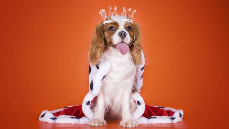わたしが王様!「ワガママ犬」の主な特徴とは?