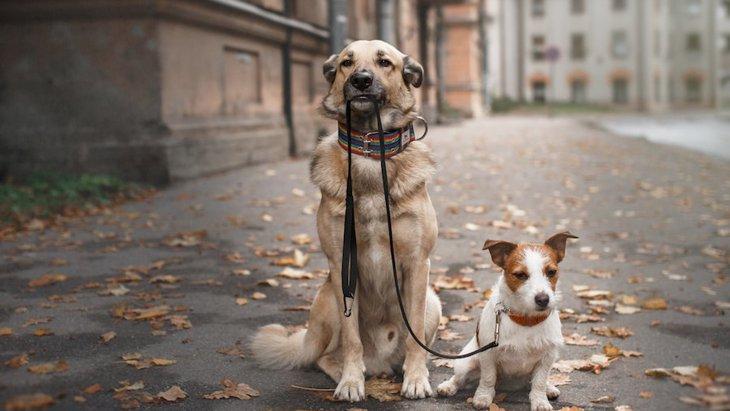 他の犬と愛犬、一緒に散歩させない方がいい?