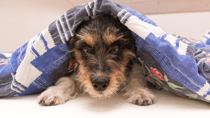 犬を冬にお留守番させるときにしたい4つの対策