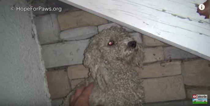 困り顔がキュートな犬のレスキュー。素敵な名前が幸運を呼び込んだかも
