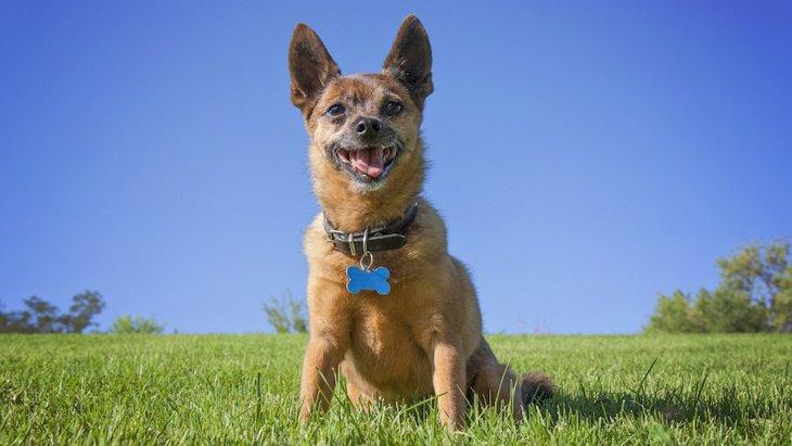 愛犬とアウトドアデビューする時に注意すべき3つのこと