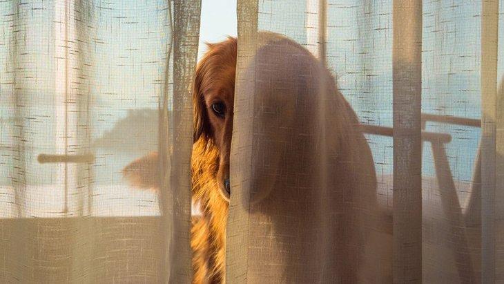 犬が悲しい表情でこちらを見てくる心理4選
