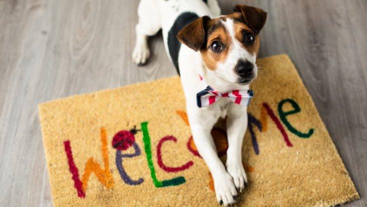 犬と暮らす!をより快適に「ペット共生住宅管理士」検定6月3日開講