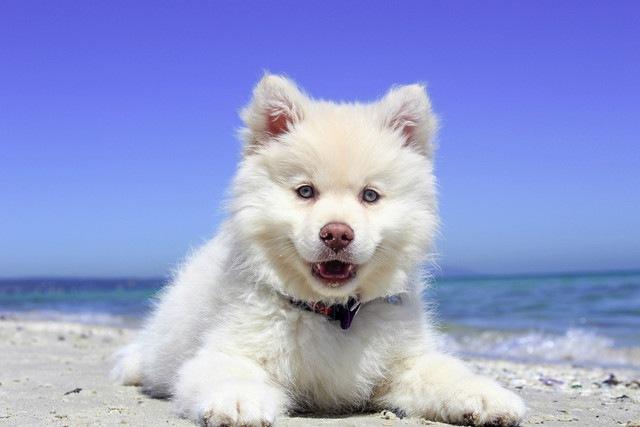 夏生まれの犬は心臓疾患のリスクが高い!?【研究結果】