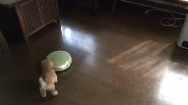 子犬ちゃんがお掃除ロボットとご対面!その反応は?