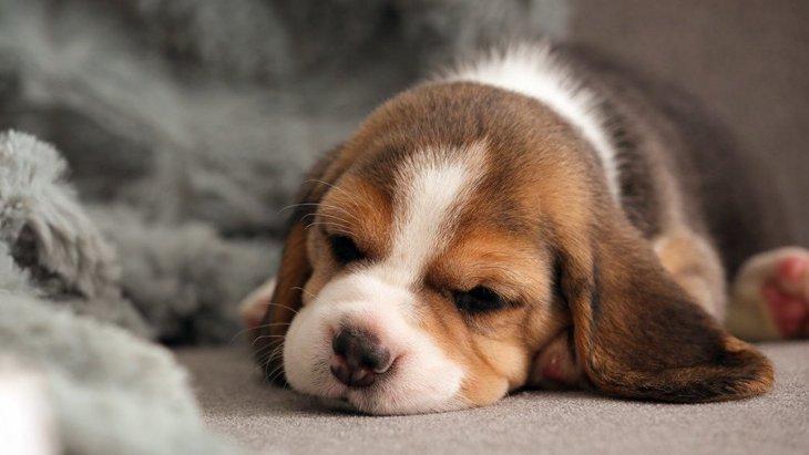 犬の『社会化』をやらないとどうなる?考えられる5つのリスク