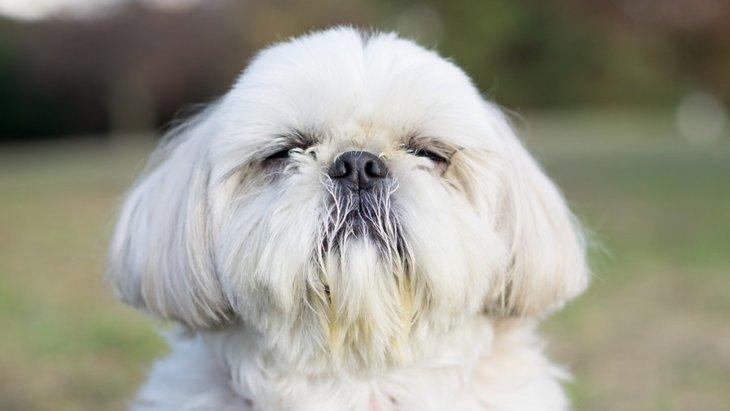 犬の顔に表れる体調不良のサイン4つ