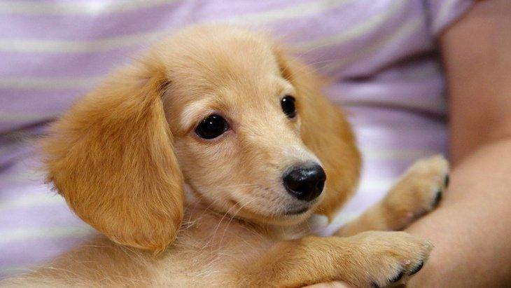 子供が犬を抱っこするのは危険?抱っこさせるコツや絶対注意すべきこと