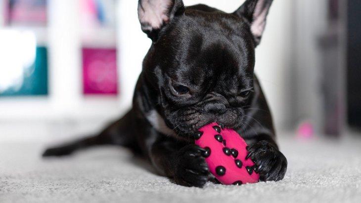 お留守番におすすめ!犬がよろこぶ『遊び道具』3選