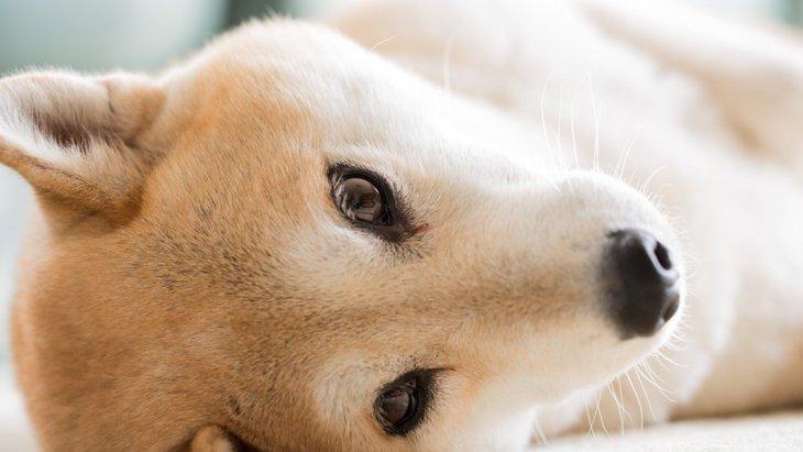 犬が甘えている時に出す鳴き声4選