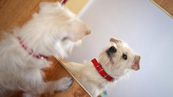 犬は『鏡』を理解してるの?吠えてしまう時の対処法は?