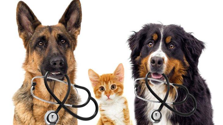 犬のガンの新しい治療薬の開発に朗報【研究結果】