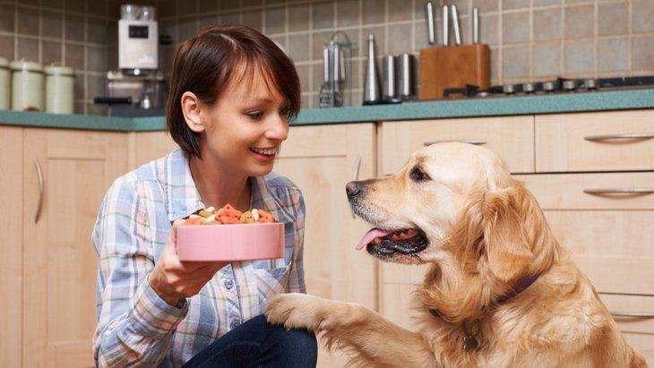 犬がご飯を食い散らかす6つの原因と対処法