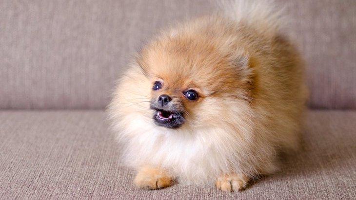 犬の鳴き声がうるさくなる原因と対策