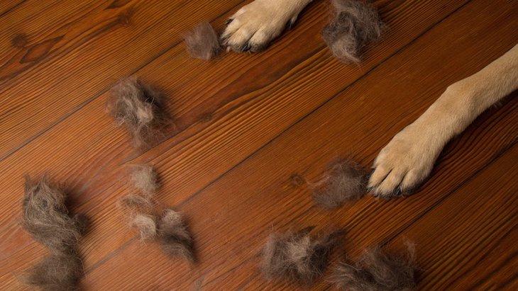 犬がかかりやすい病気や症状5選