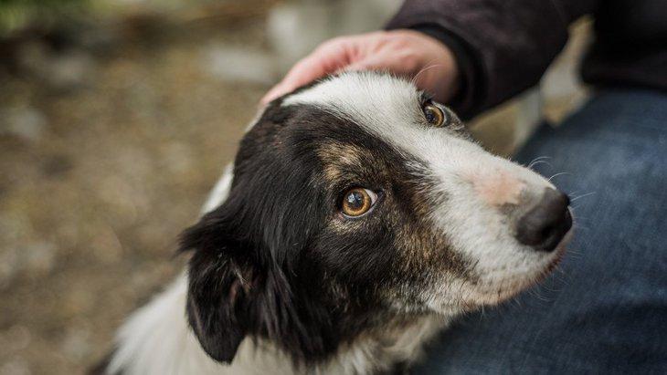 犬から嫌われている時のサイン4選!どんな人が嫌われやすいの?