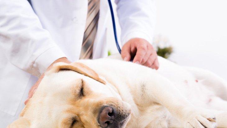 愛犬を夜間救急に連れて行く時に知っておくべきこと2つ