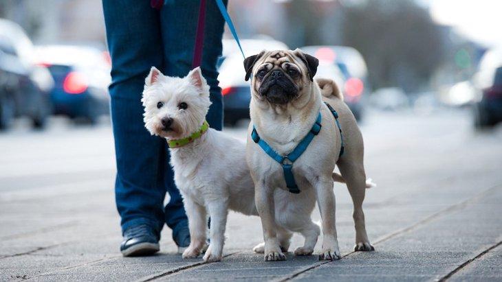 散歩中に犬の首輪が抜けてしまったとき『絶対NG行為』2選
