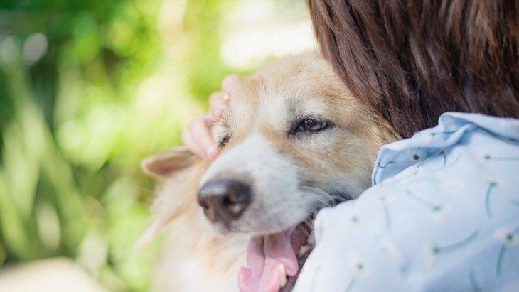 犬を『甘やかしすぎる』と病気になる?4つの危険性やNGな理由を解説
