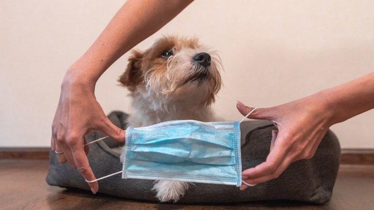 区別しておきたい犬のコロナウイルスと新型コロナウイルス