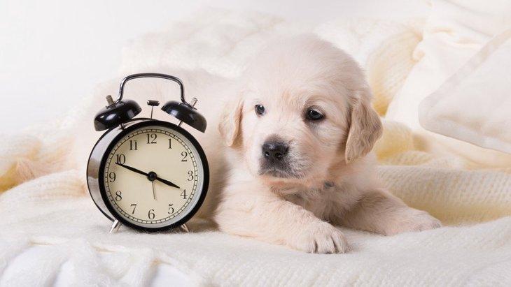 犬が早起きになる原因と対処法