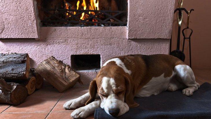 犬に危険な暖房器具とは?やってはいけない行為と対策