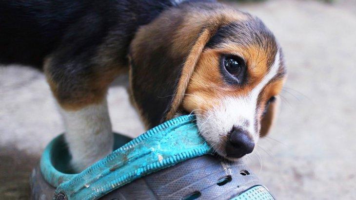 離してほしい!犬がくわえているものを離さない時の対処法