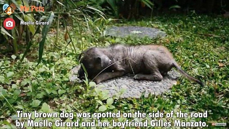捨てられていた仔犬をきっかけに、バリ島で保護活動を始めたカップル