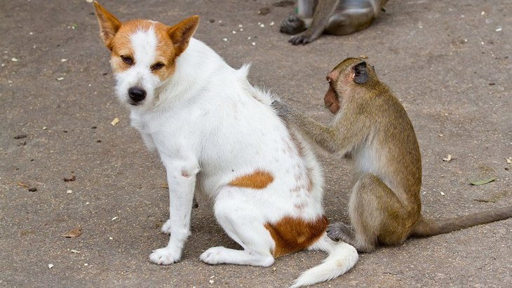 「犬猿の仲」と言われているけど犬と猿は本当に仲が悪いの?