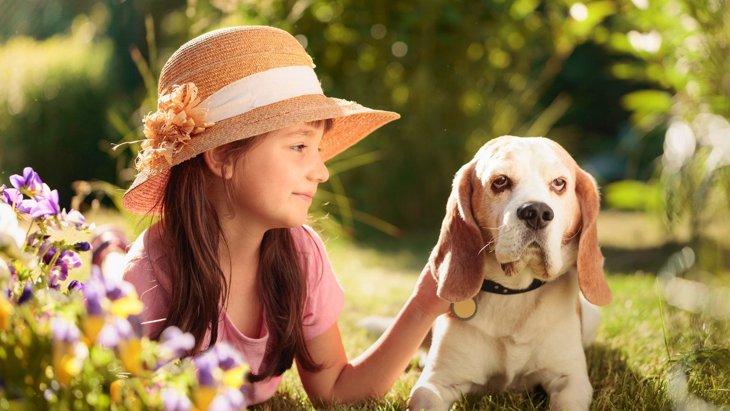 『お金に余裕がない人』は犬を飼うべきではない?5つのリスクや考え方