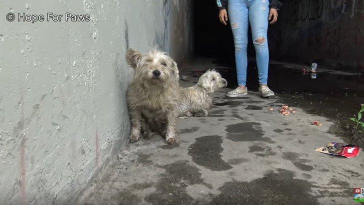 下水道から聞こえた鳴き声をキャッチ!仲良しの小型犬ペアを保護