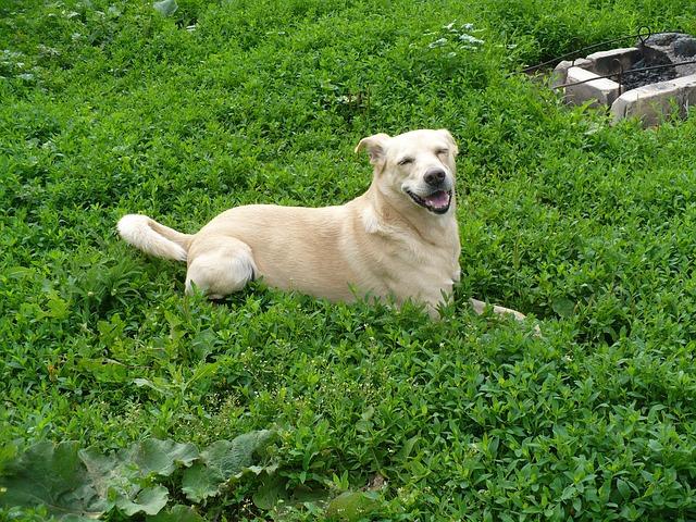 雑種犬が病気に強くて賢いと言われる理由