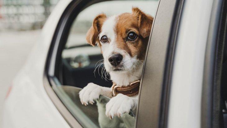 犬とのドライブを安全にする4つのヒント