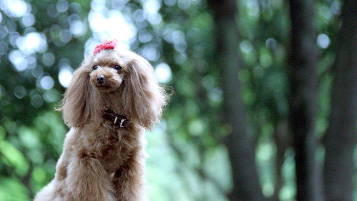 愛犬に音楽を聴かせて心穏やかに!ヒーリングミュージック