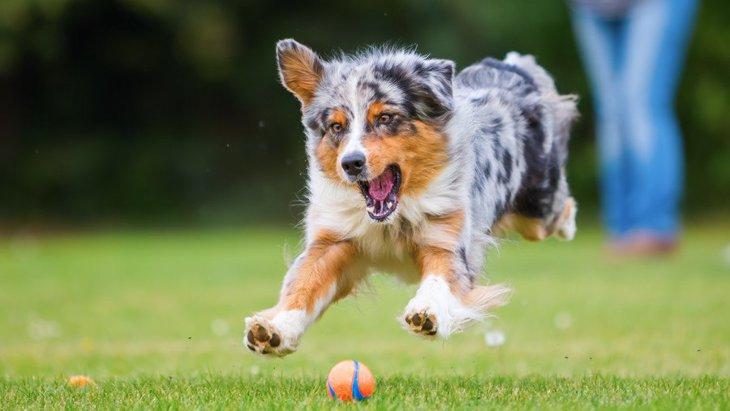 犬がはしゃぎすぎてしまうNG行為4選!しつこくするとどんな悪影響があるの?