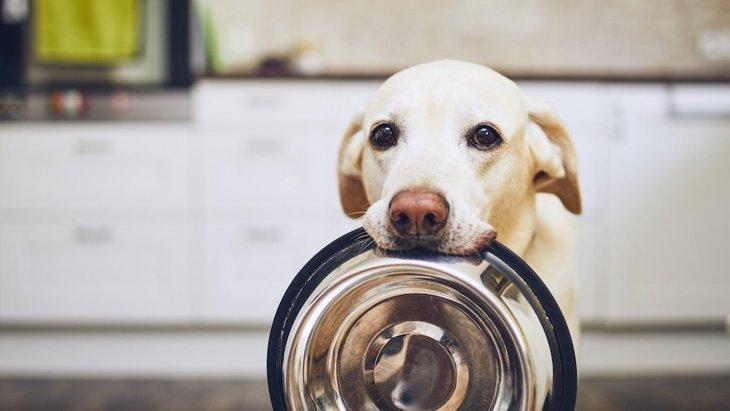 いつまでも食べ続ける!犬が『満腹』になることはあるの?