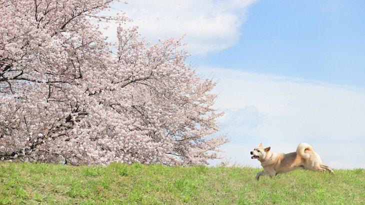 犬が出てくる日本の昔話4選