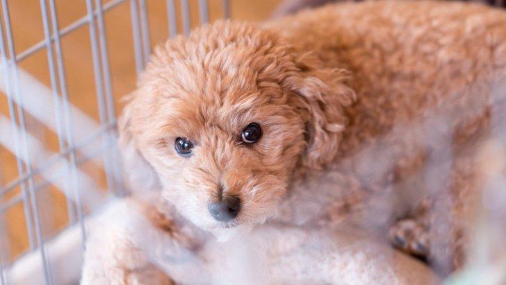 犬に初めての経験をさせる時のポイントや注意点