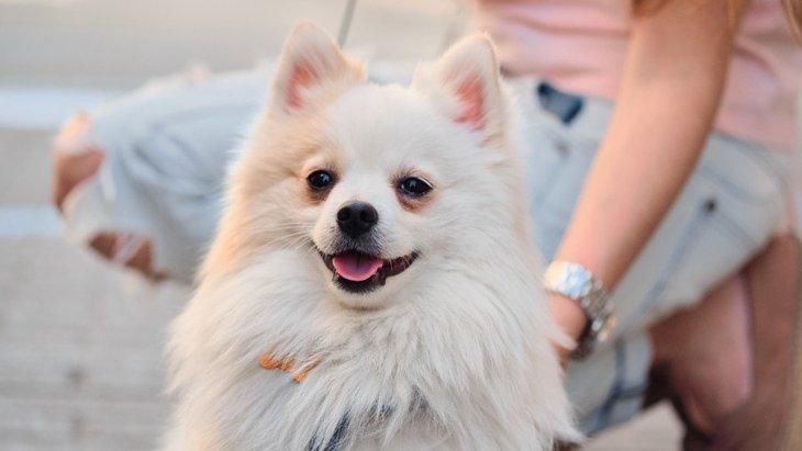 何が犬を落ち着かせる?散歩中の犬の脈拍についての興味深いリサーチ