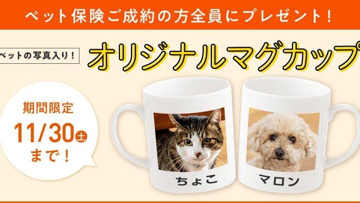 【締切間近!】ペット保険成約で豪華Wキャンペーン