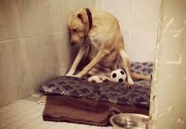 保護施設に戻された犬が、ショックでうつ状態に(まとめ)