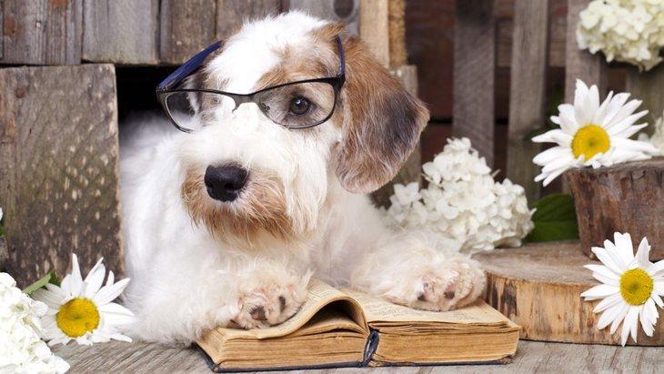 使い終わった犬用品を便利グッズに変える6つのアイデア