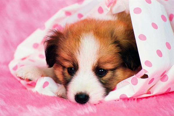 犬の乳腺腫瘍の正しい知識。原因や症状、予防・治療法
