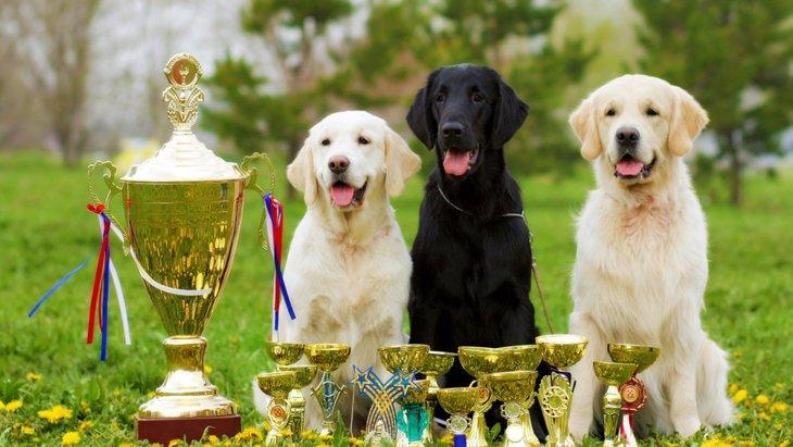 愛犬を自慢したい!犬のコンテストや大会の種類4選
