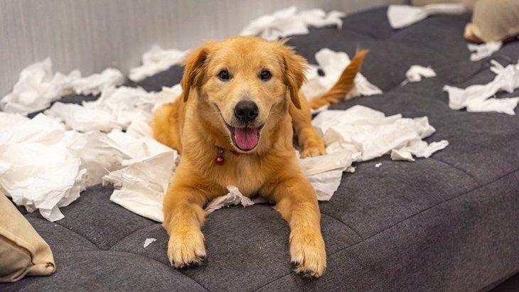 愛犬がティッシュを食べてしまう理由3つ!やめさせる方法は?