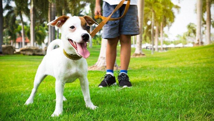 犬のノーリードはどれだけ危険なの?