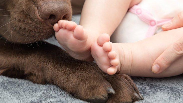 赤ちゃんが触れ合ったペットの数がアレルギー発症を抑える鍵【研究結果】