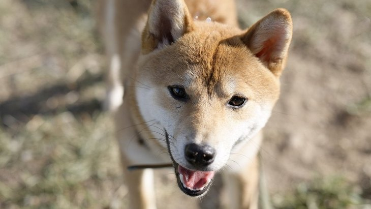 犬は写真を見ただけで『飼い主を見分ける』ことはできるの?