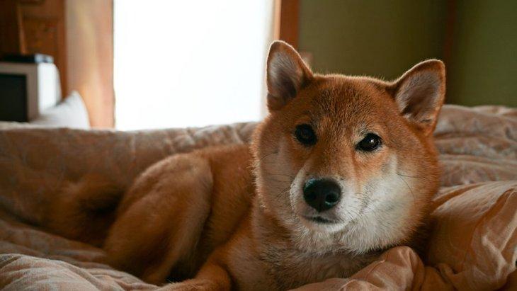 狭い家でも犬は飼える?犬を飼うのに必要なスペースや間取りとは