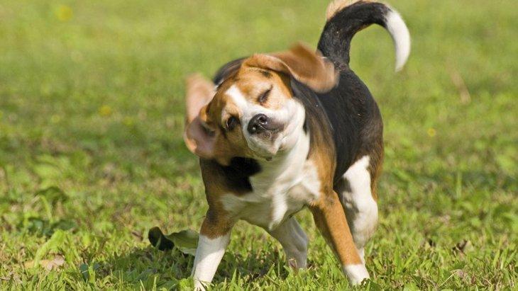 犬が本気で嫌がっている時に見せる仕草や行動5選